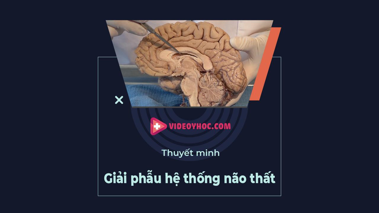Giải phẫu não: hệ thống não thất