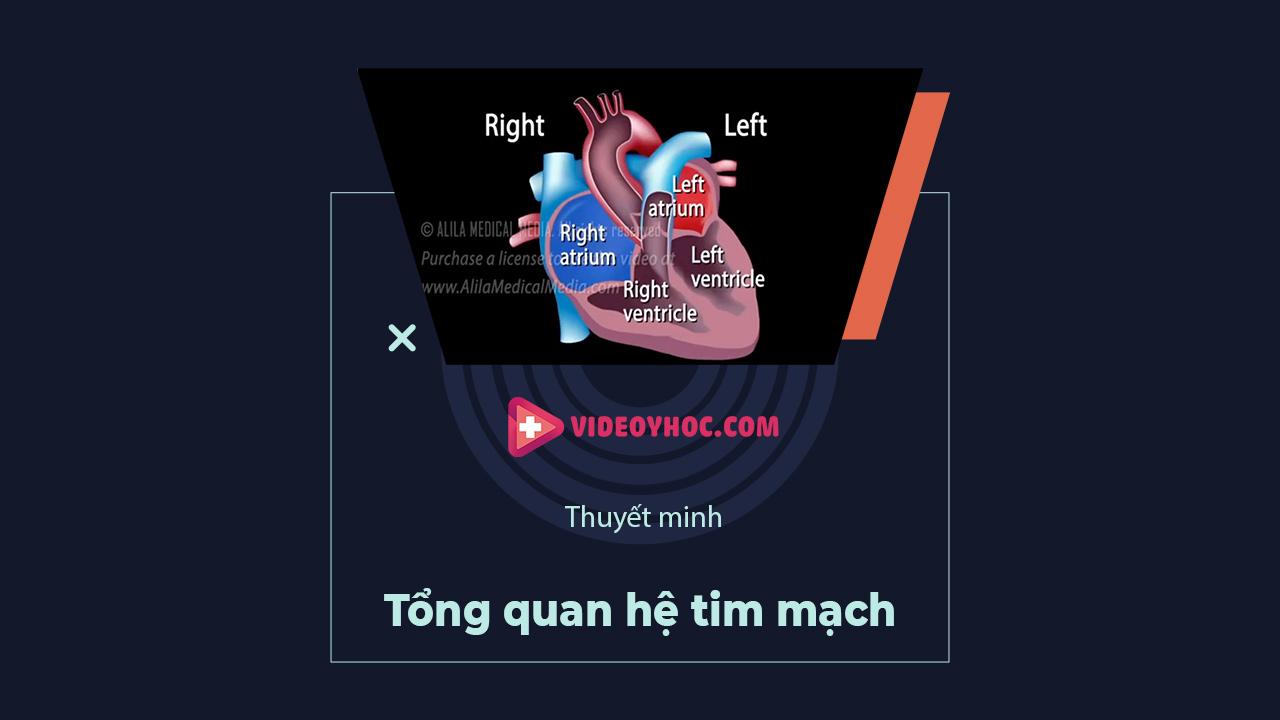 Tổng quan hệ tim mạch
