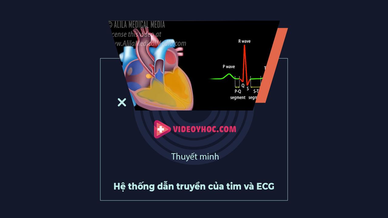 Hệ thống dẫn truyền của tim và ECG